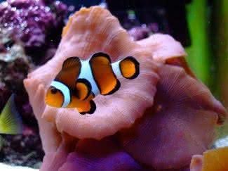 aqua-vista, aqua-vista-aquarium, aquario-de-parede, aquario, aquario-decoracao, por-que-nao-pensei-nisso 8
