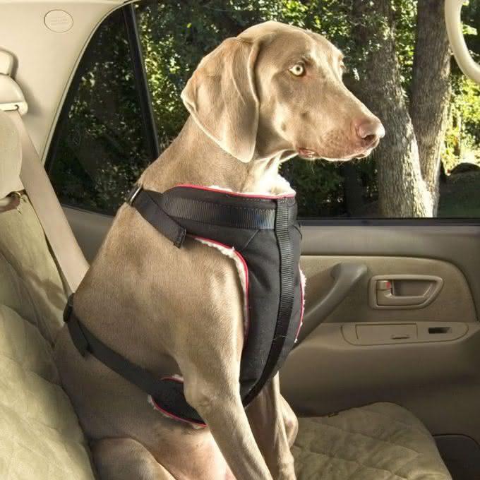 Quer Proteger Seu Cachorro Em Uma Batida De Carro Por