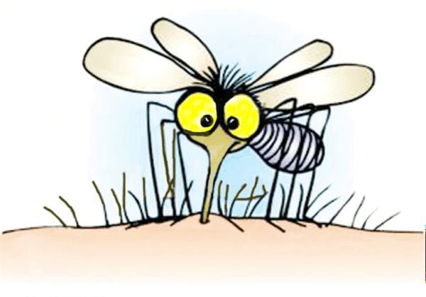 mosquito000