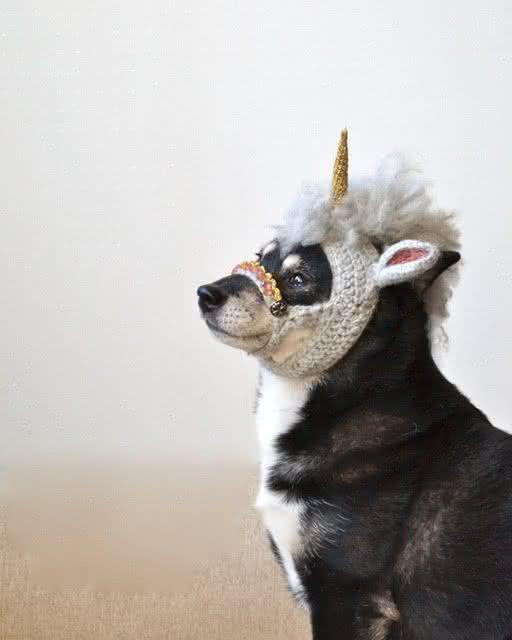 roupa-de-unicornio, fantasia-para-cachorro, fantasia-unicornio-cachorro, fantasia-pet, roupas-para-cachorro, roupinha-de-cachorro, por-que-nao-pensei-nisso 1