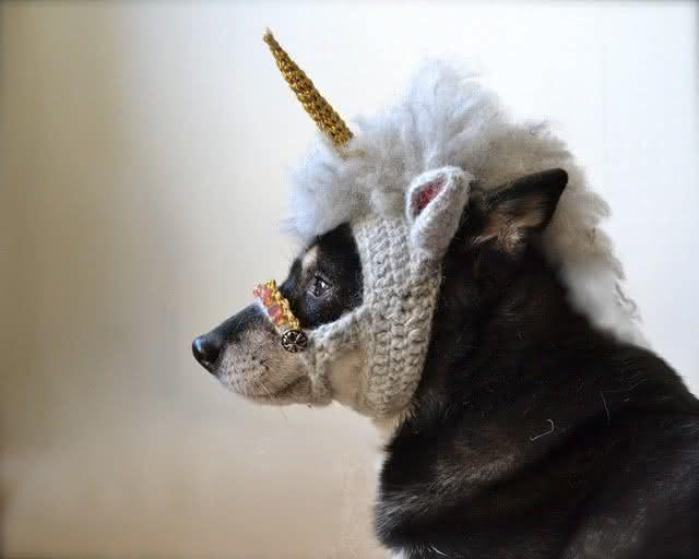roupa-de-unicornio, fantasia-para-cachorro, fantasia-unicornio-cachorro, fantasia-pet, roupas-para-cachorro, roupinha-de-cachorro, por-que-nao-pensei-nisso 2