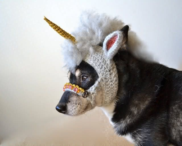 roupa-de-unicornio, fantasia-para-cachorro, fantasia-unicornio-cachorro, fantasia-pet, roupas-para-cachorro, roupinha-de-cachorro, por-que-nao-pensei-nisso 3