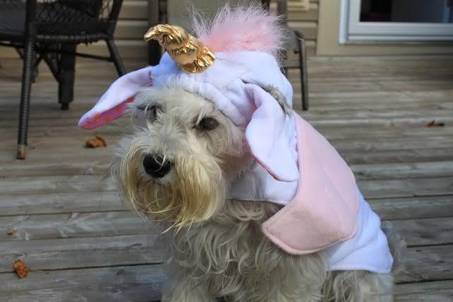 roupa-de-unicornio, fantasia-para-cachorro, fantasia-unicornio-cachorro, fantasia-pet, roupas-para-cachorro, roupinha-de-cachorro, por-que-nao-pensei-nisso 5