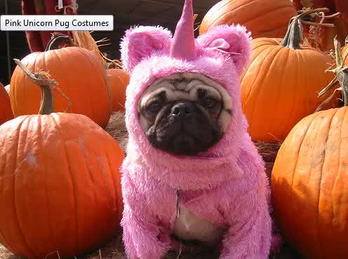 roupa-de-unicornio, fantasia-para-cachorro, fantasia-unicornio-cachorro, fantasia-pet, roupas-para-cachorro, roupinha-de-cachorro, por-que-nao-pensei-nisso