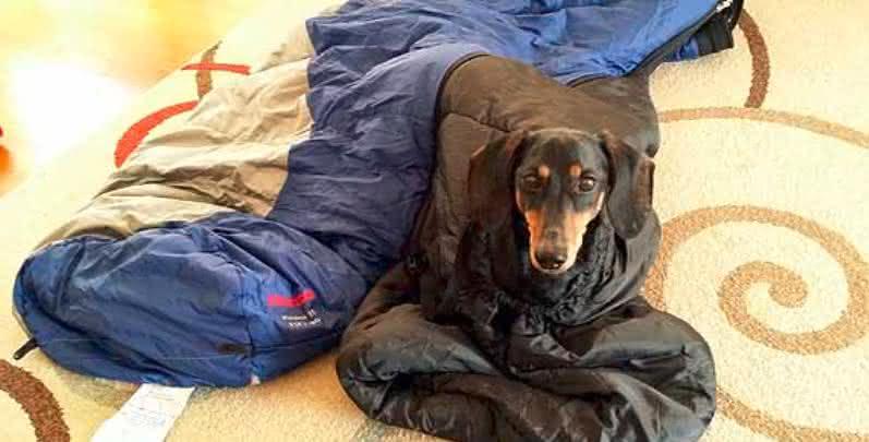 BarkerBag-Dog-Sleeping-Bag, saco-de-dormir-para-cachorro, quanto-custa-saco-de-dormir, acampamento-sleeping-bag, acampar-saco-de-dormir, por-que-nao-pensei-nisso 2