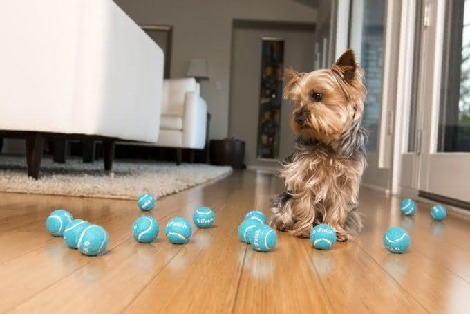 iFetch-joga-bolinha, arremesso-bolinha-cachorro, brincar-cachorro, treinar-cachorro-brincadeira, bolinha-pra-cachorro, jogar-bolinha, por-que-nao-pensei-nisso 6