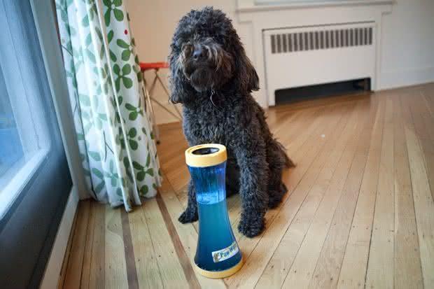 Paw-Wash, limpa-patas-cachorro, limpar-sujeira-de-cachorro, carpete-piso-limpo, pata-suja-de-cachorro, por-que-nao-pensei-nisso 8