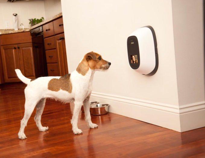 petchatz, interfone-cachorro, fale-com-cachorro, telefone-cachorro, falar-pet, produto-pet, video-pet, por-que-nao-pensei-nisso 1