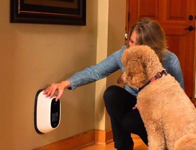 petchatz, interfone-cachorro, fale-com-cachorro, telefone-cachorro, falar-pet, produto-pet, video-pet, por-que-nao-pensei-nisso 4