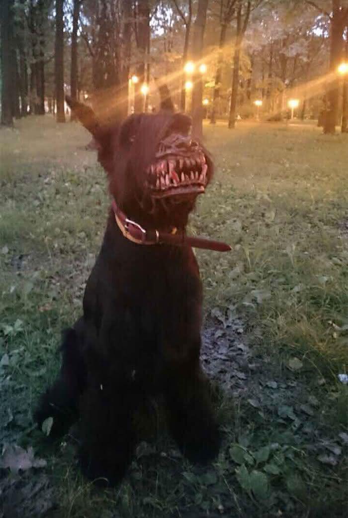 russian-werewolf-dog-muzzle, focinheira-cachorro, focinheira lobisomem, halloween, produtos-halloween, por-que-nao-pensei-nisso, pnpn 22